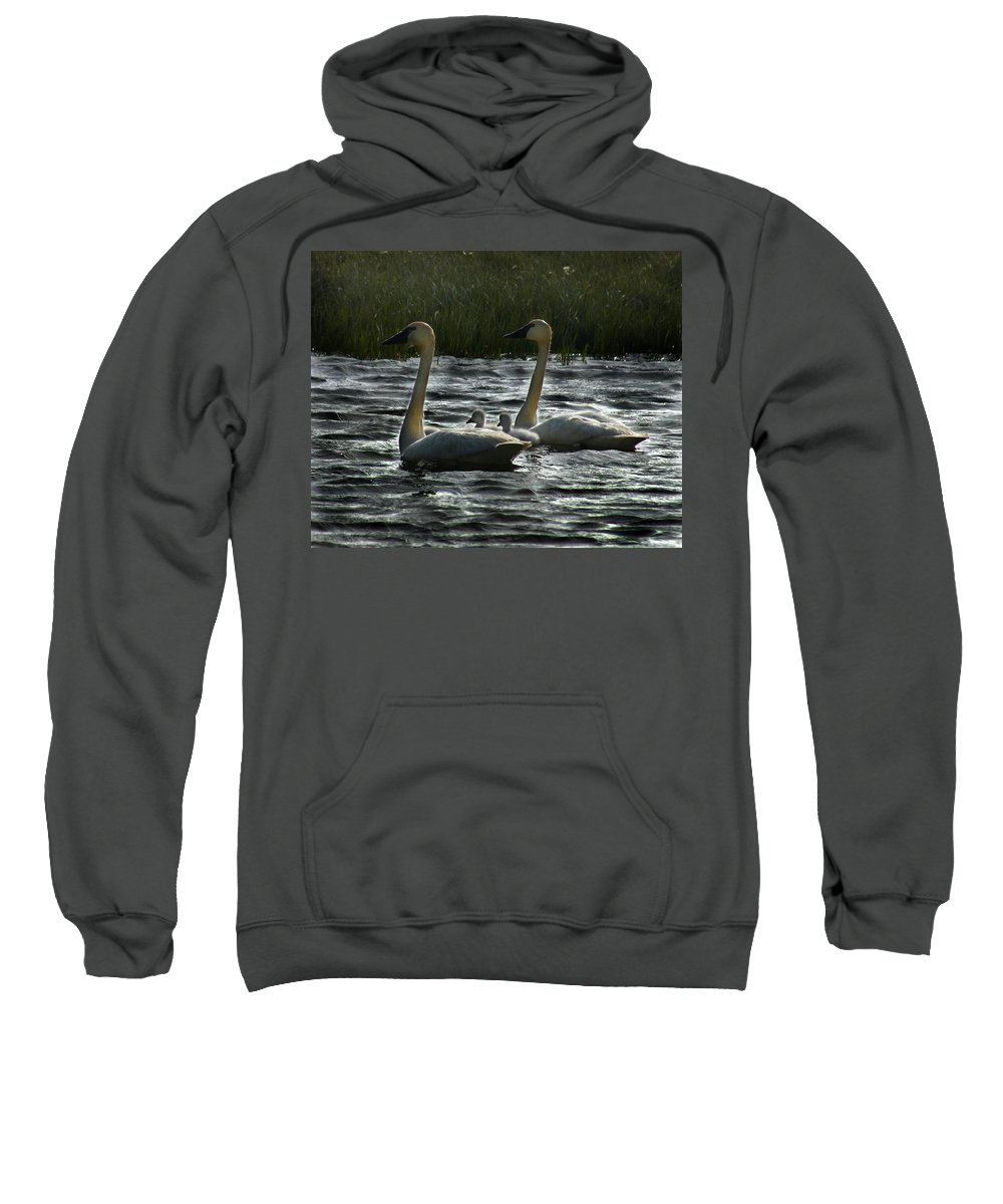 Tundra Swans Sweatshirt featuring the photograph Tundra Swans by Anthony Jones