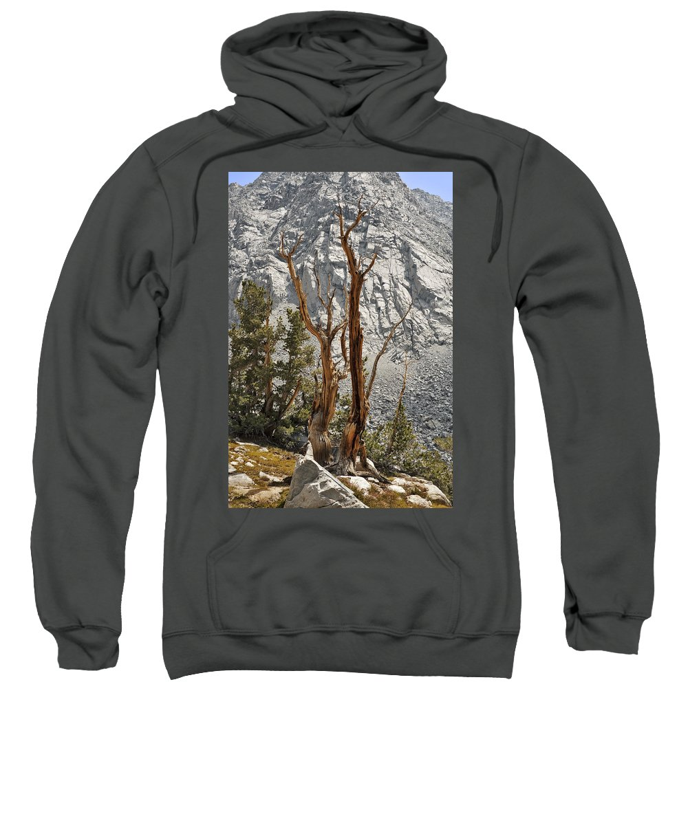 Tree Sweatshirt featuring the photograph Twin Sticks by Kelley King