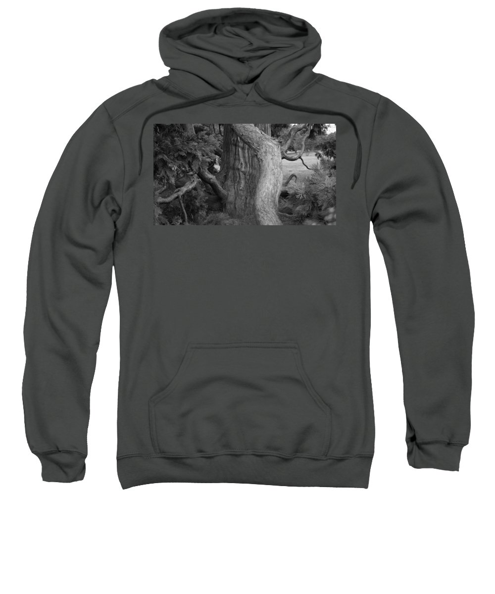 Tree Sweatshirt featuring the photograph Twisted Old Tree by Tina Meador