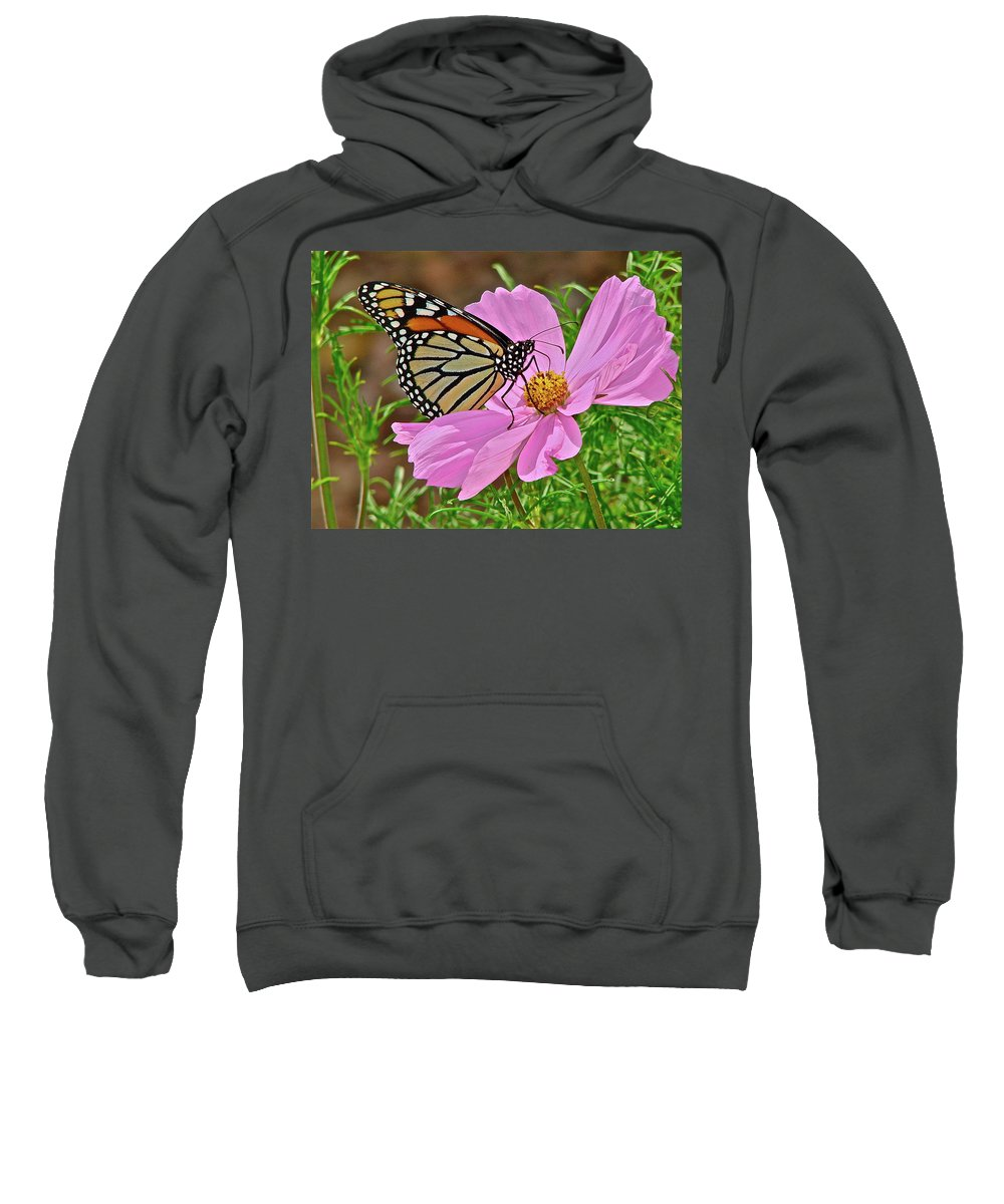 Butterfly Sweatshirt featuring the photograph Two Beauties by Diana Hatcher