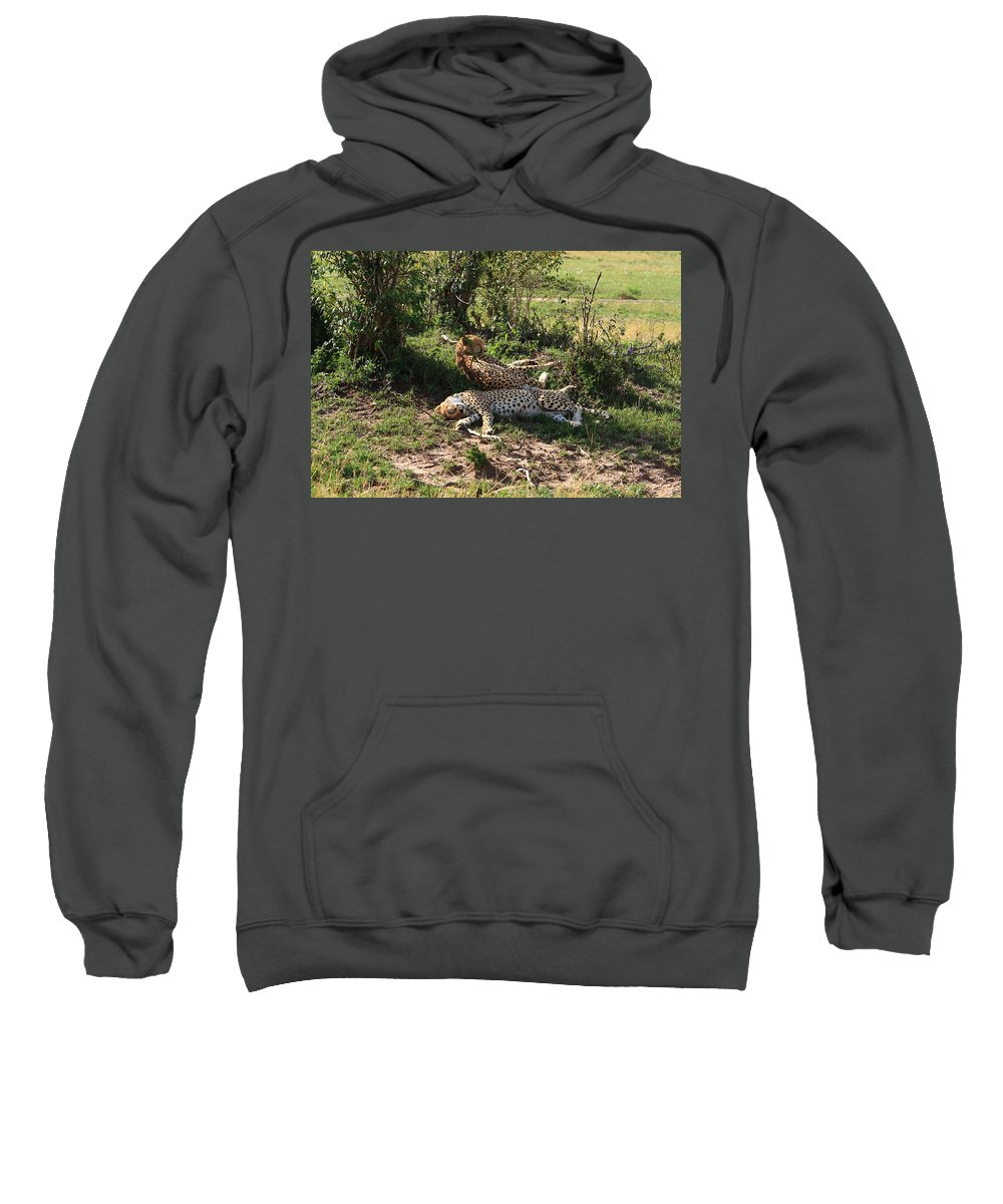 Cheetah Sweatshirt featuring the photograph Two Cheetahs by Aidan Moran