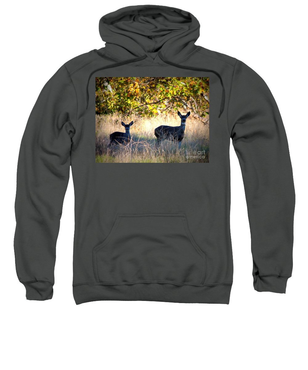 Animal Sweatshirt featuring the photograph Two Deer In Autumn Meadow by Carol Groenen