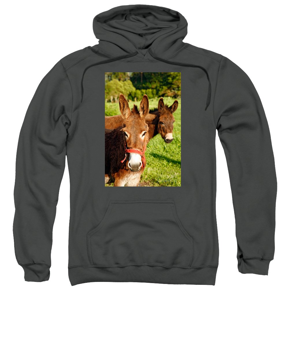 Animals Sweatshirt featuring the photograph Two Donkeys by Gaspar Avila