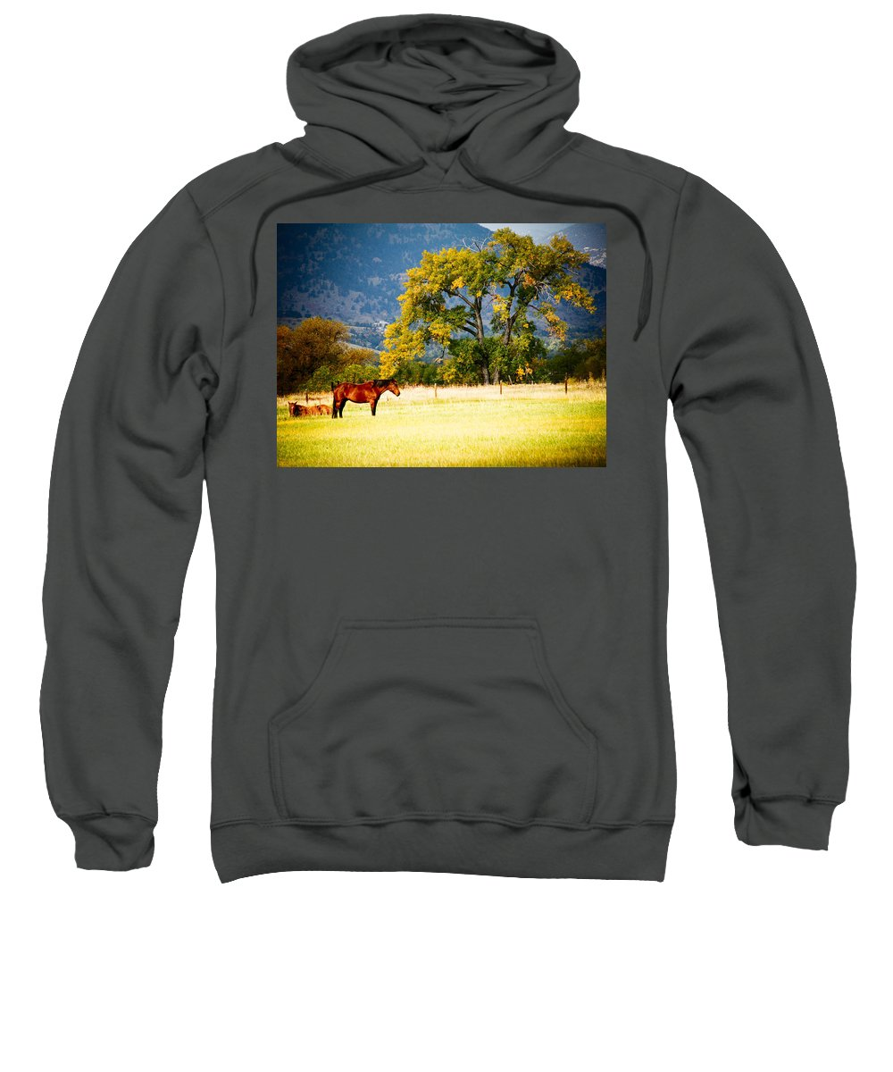 Animal Sweatshirt featuring the photograph Two Horses by Marilyn Hunt