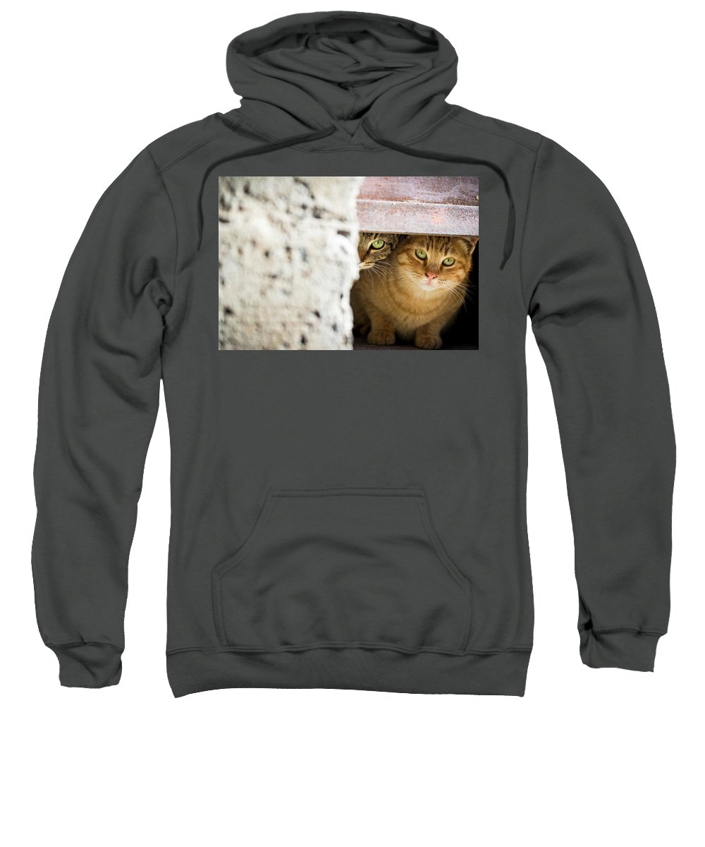 Cats Sweatshirt featuring the photograph Two Stray Cats by Alexandra Kahn