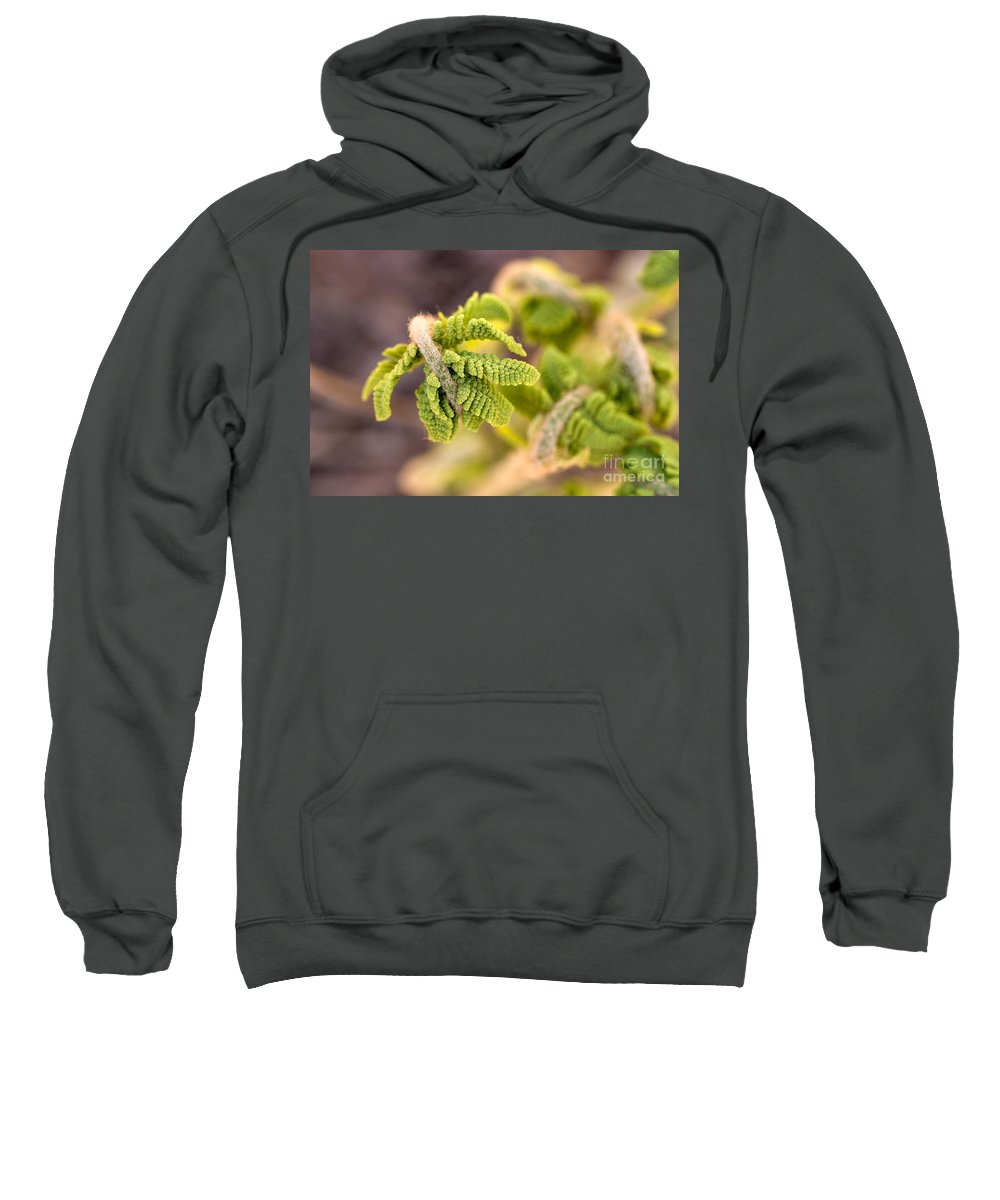 Nature Sweatshirt featuring the photograph Unfolding Fern Leaf by Louise Heusinkveld