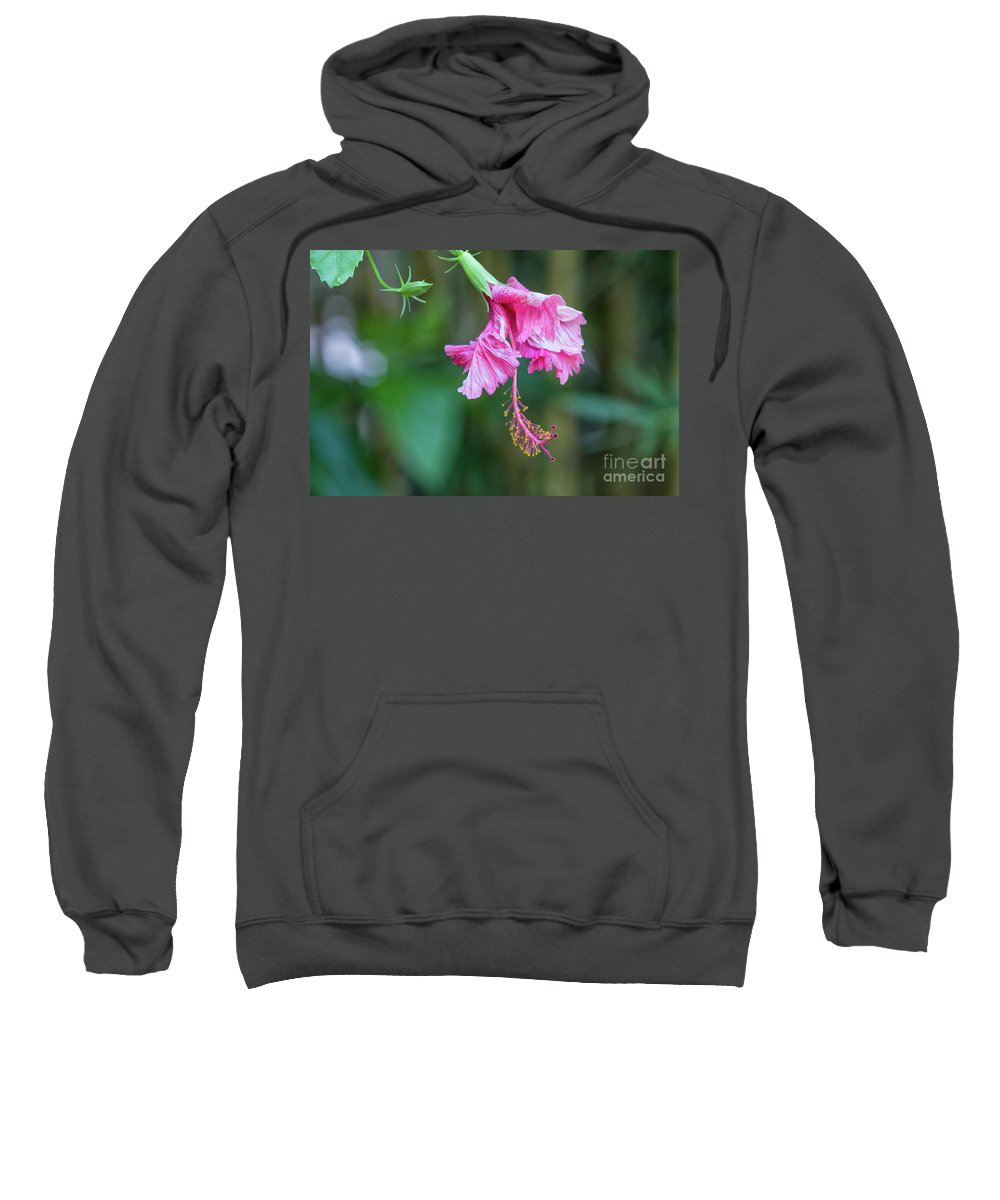 Unfolding Of A Hibiscus Sweatshirt featuring the photograph Unfolding Of A Hibiscus by Felix Lai