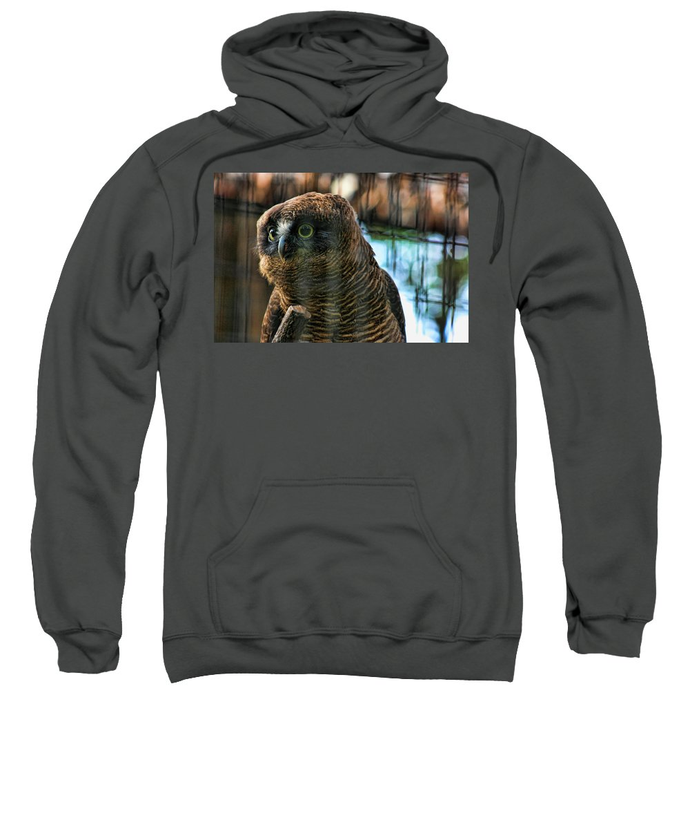 Rufous Owl Sweatshirt featuring the photograph Unlawful Detention by Douglas Barnard