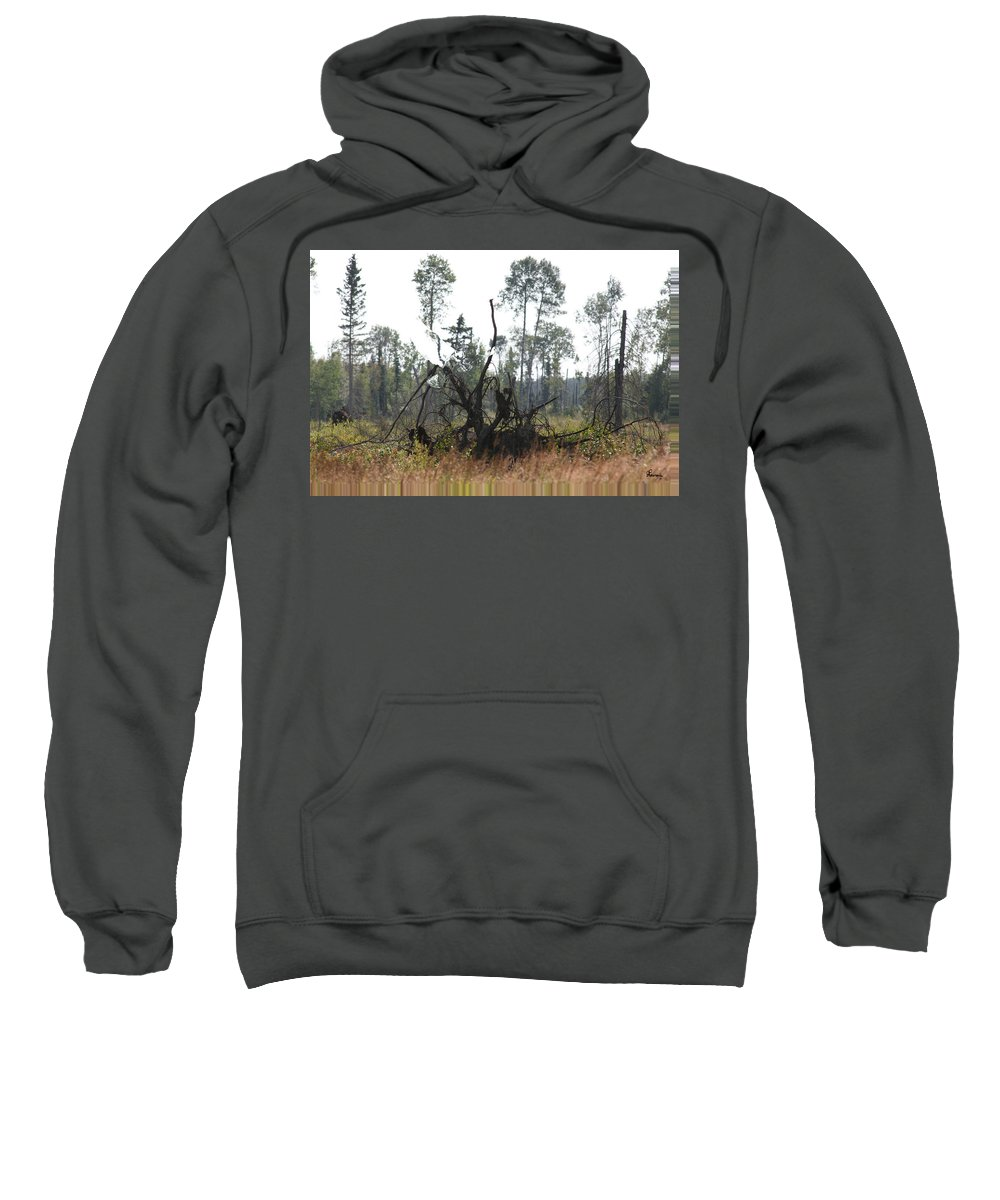 Roots Tree Stump Hawk Bird Wild Forest Nature Feeling Abstract Sweatshirt featuring the photograph Uprooted by Andrea Lawrence
