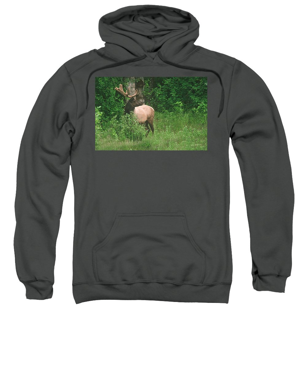 Elk Sweatshirt featuring the photograph Velvet Never Looked So Good by Mick Anderson