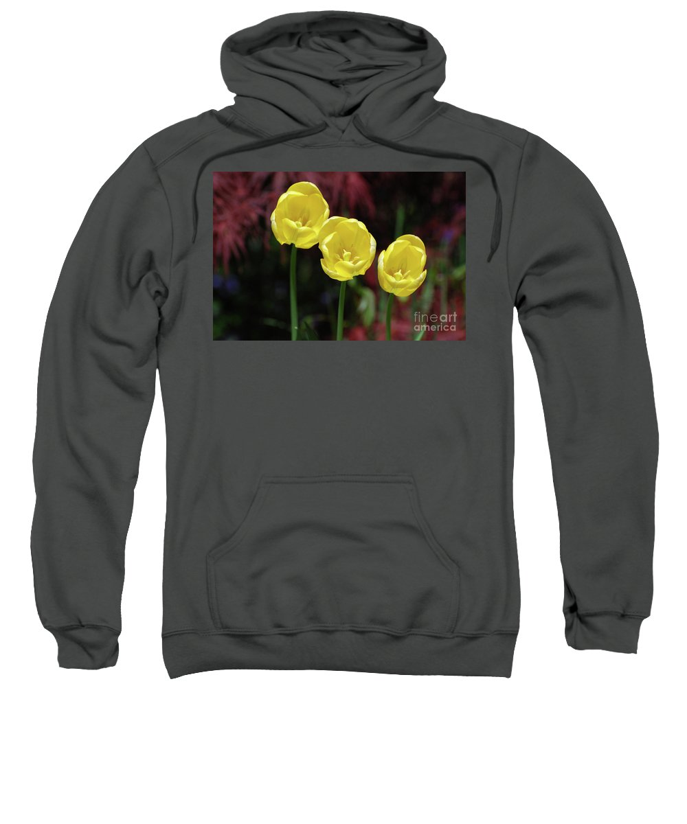 Tulip Sweatshirt featuring the photograph Very Blooming And Flowering Trio Of Yellow Tulips by DejaVu Designs