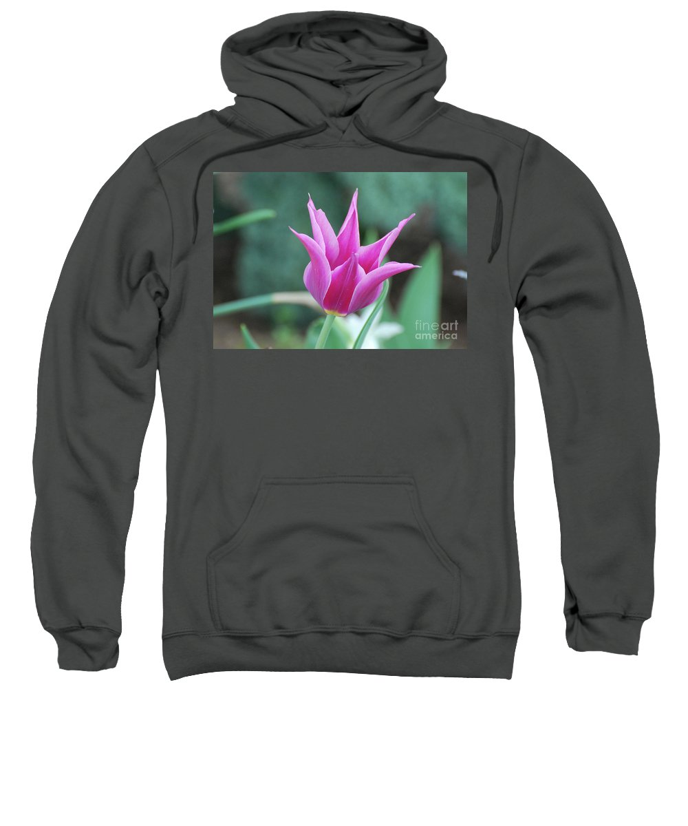 Tulip Sweatshirt featuring the photograph Very Pretty Blooming Pink Spikey Tulip Flower Blossom by DejaVu Designs