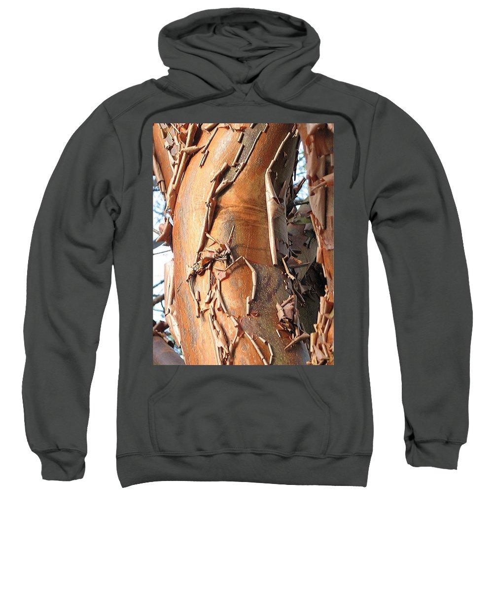 Old Tree Sweatshirt featuring the photograph Veteran by Dragica Micki Fortuna
