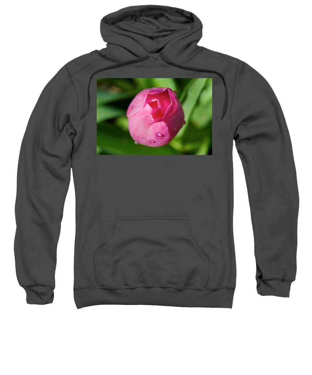 View Of Half Opened Tulip Sweatshirt featuring the photograph View Of Half Opened Tulip by Cliff Norton