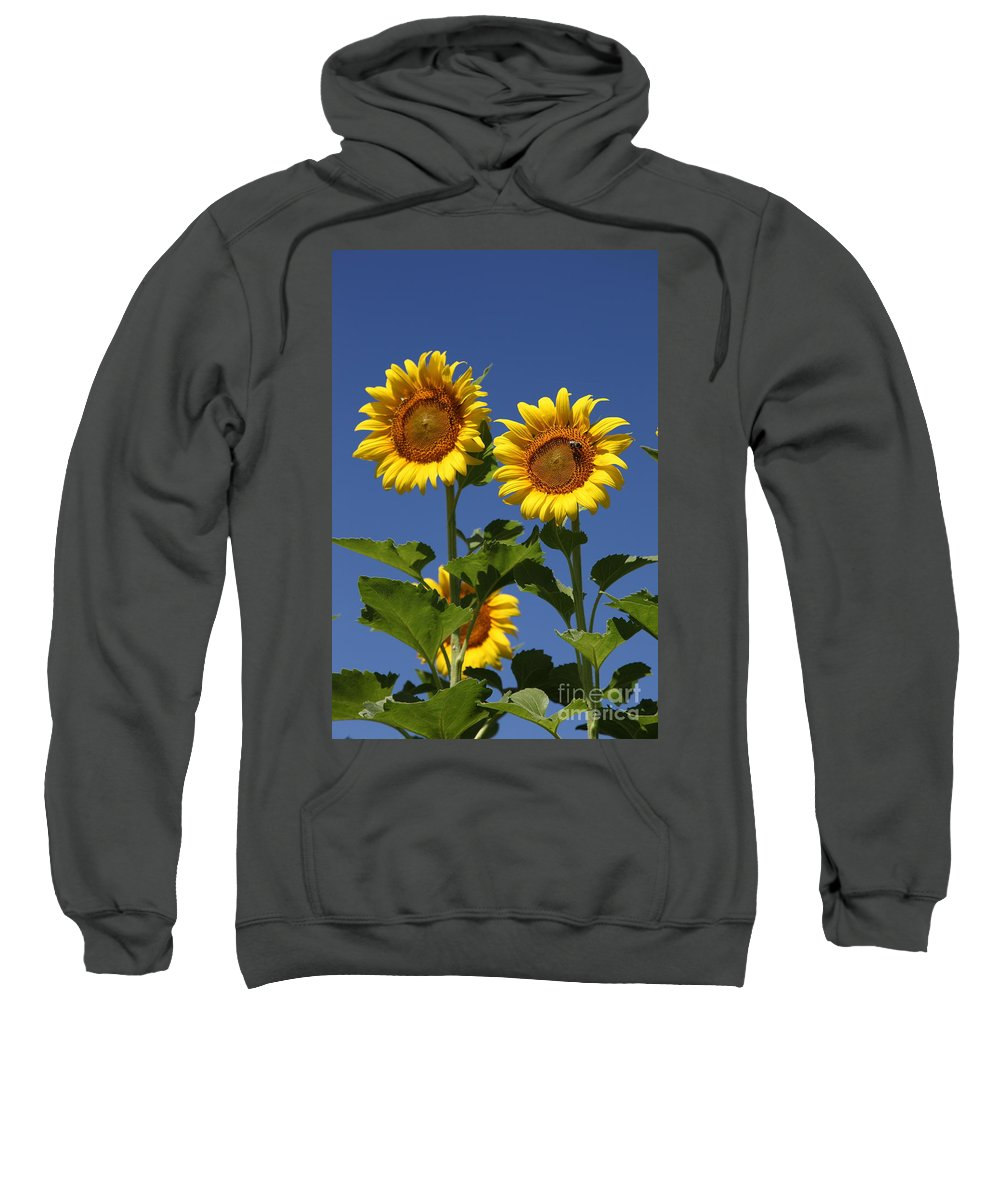 Sunflower Sweatshirt featuring the photograph Viewing The Past by Amanda Barcon