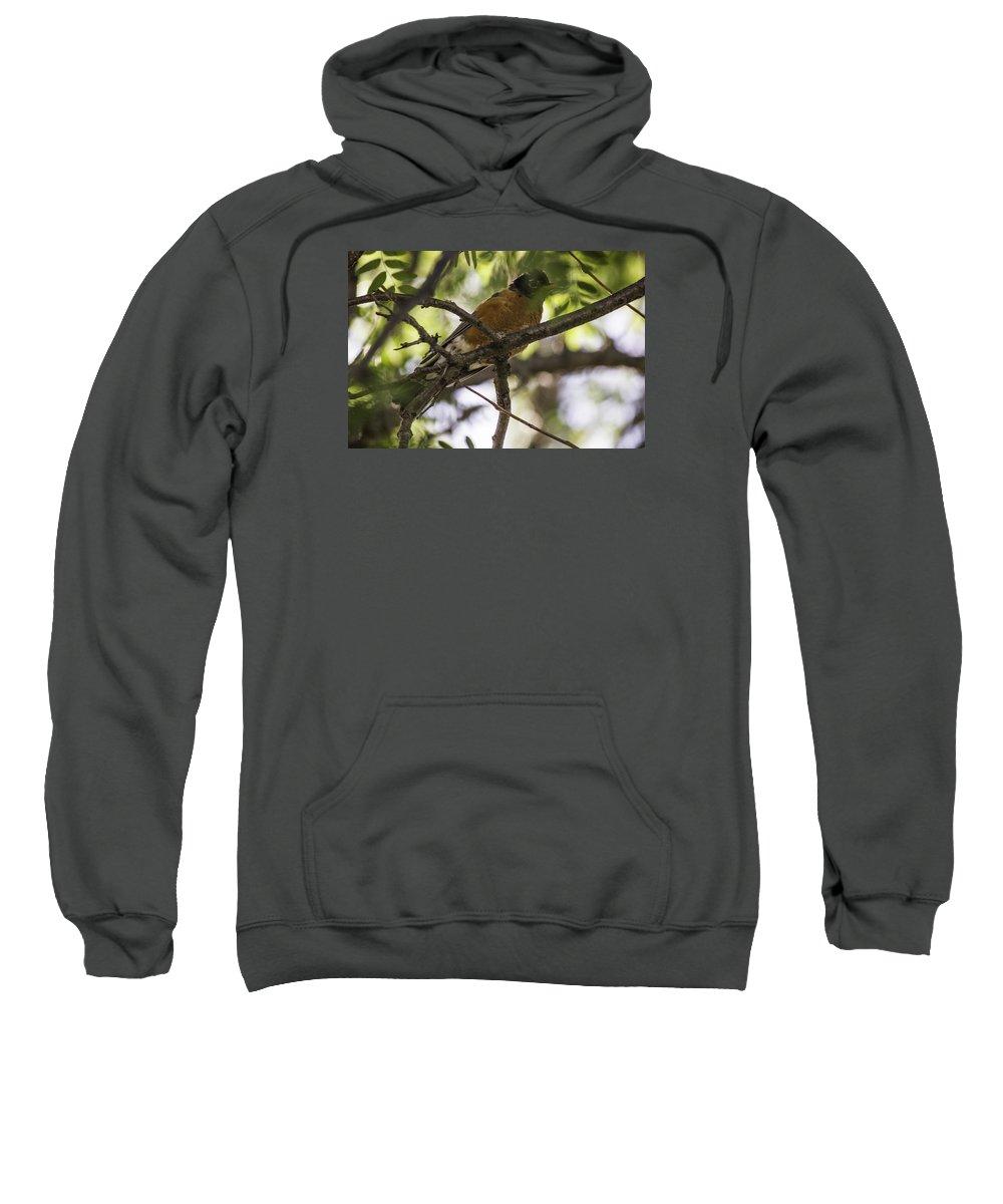 Blossoms Sweatshirt featuring the photograph Vigilance by Paul Shefferly