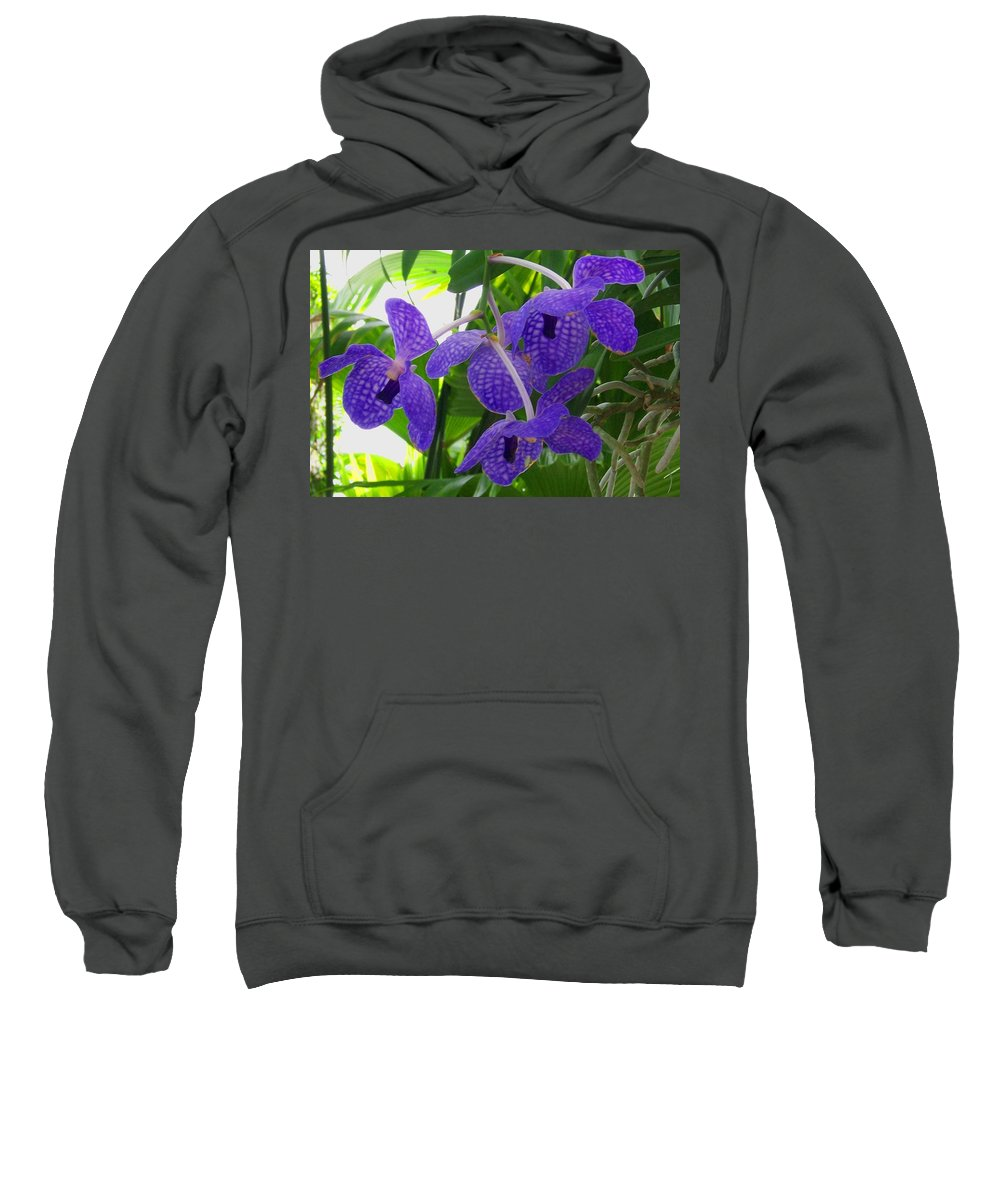 Orchid Sweatshirt featuring the photograph Violet Orchid Trio by Laurie Paci