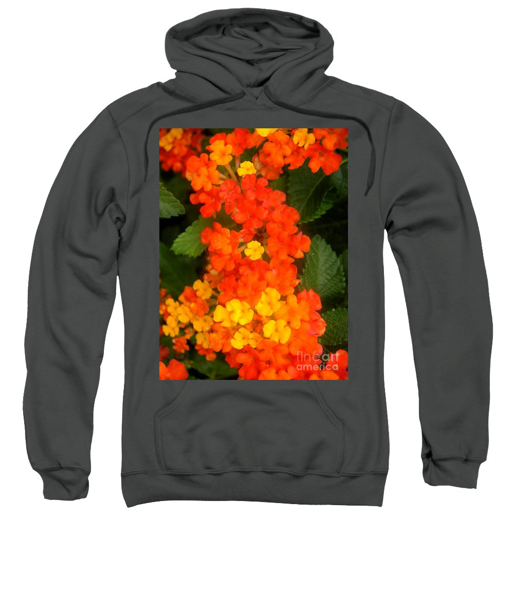 Nature Sweatshirt featuring the photograph Volcanic Display by Lucyna A M Green