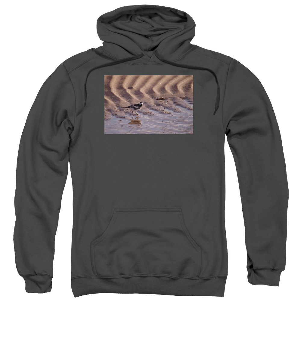 Wagtail Sweatshirt featuring the photograph Wagtail On West Sands by Adrian Wale