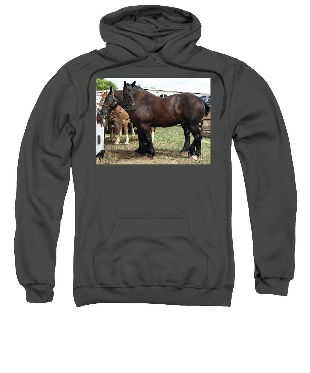 Draft Horse Sweatshirt featuring the photograph Waiting To Work by Shari Nees