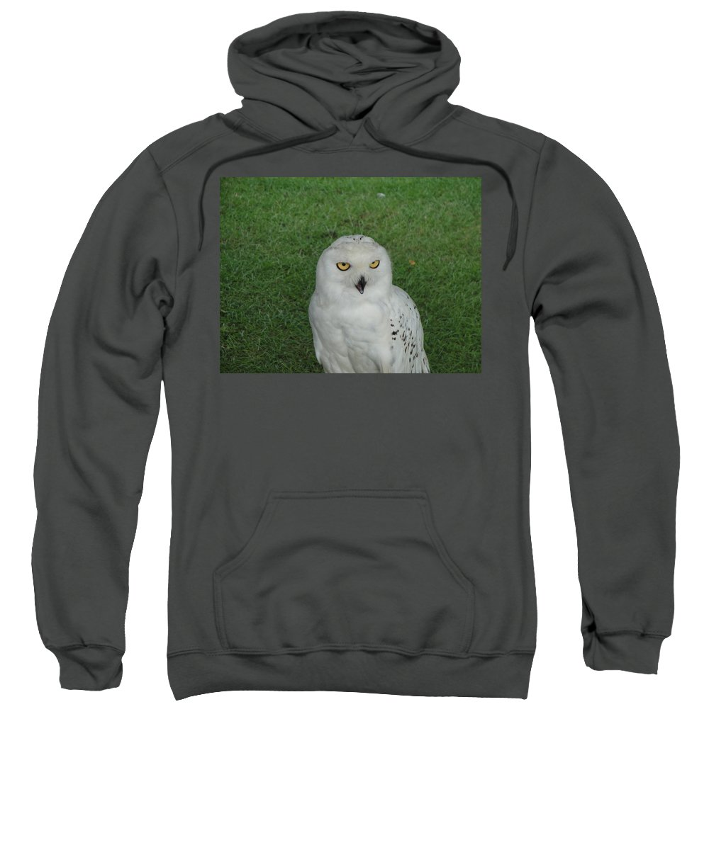 Owl Sweatshirt featuring the photograph Watching Owl by Susan Baker