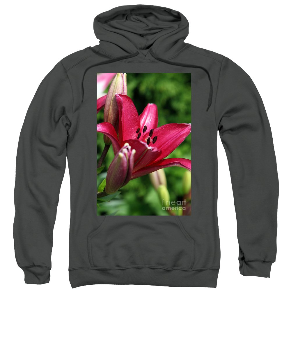 Lilly Sweatshirt featuring the photograph Welcoming by Amanda Barcon