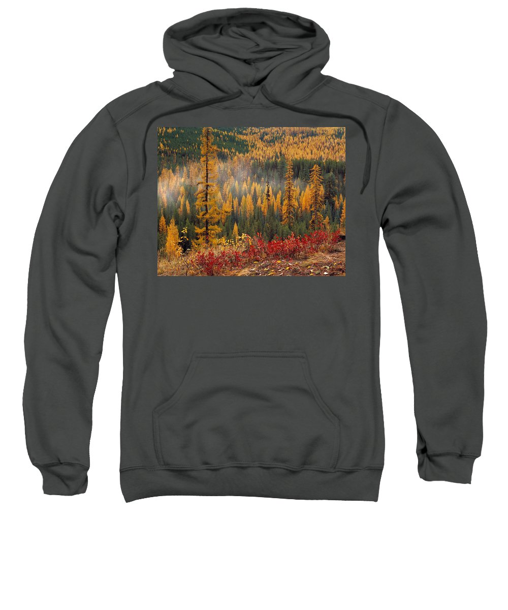 Washington Sweatshirt featuring the photograph Western Larch Forest Autumn by Leland D Howard