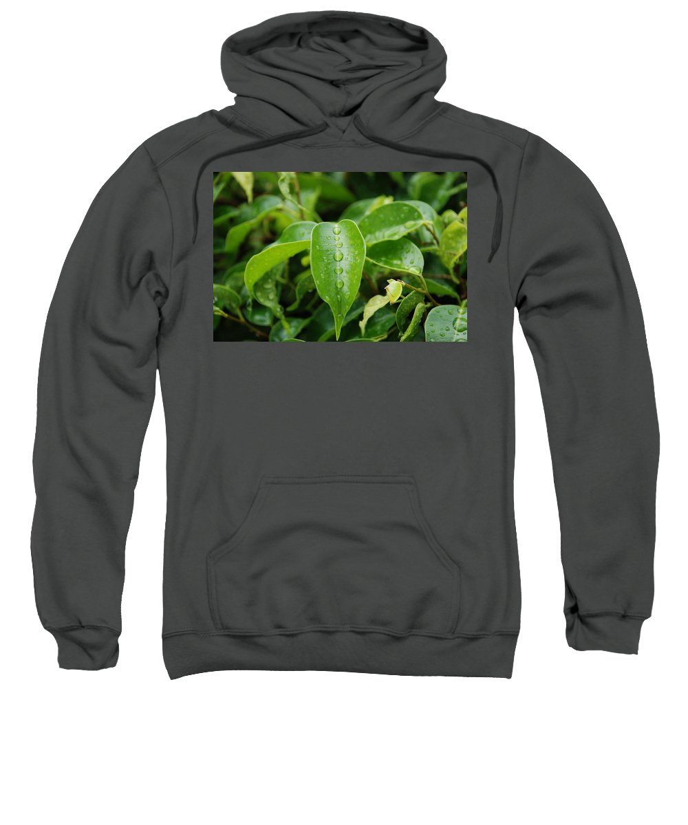 Macro Sweatshirt featuring the photograph Wet Bushes by Rob Hans