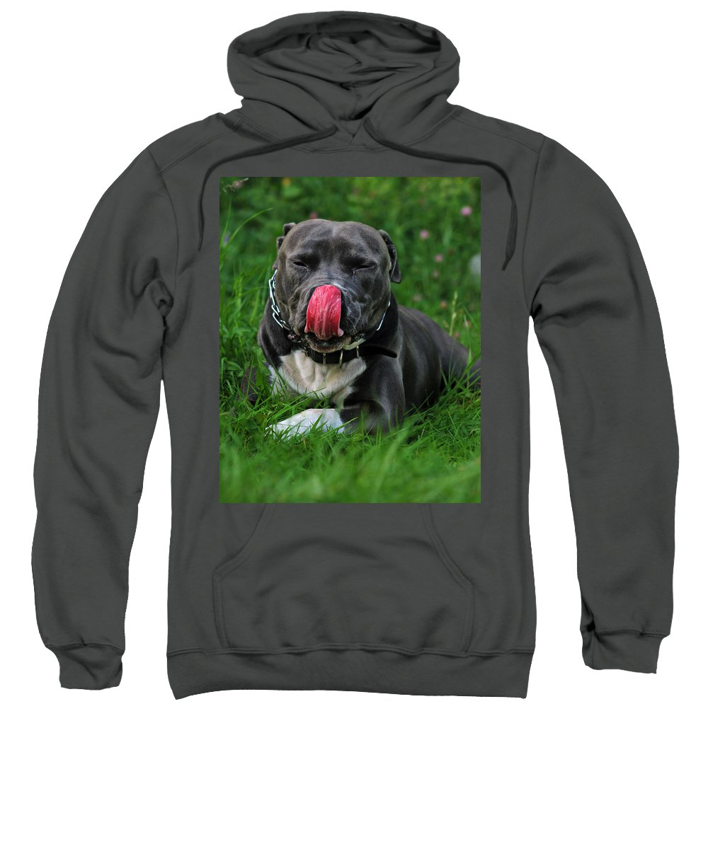 Dog Sweatshirt featuring the photograph Wet Nose by Angel Ciesniarska