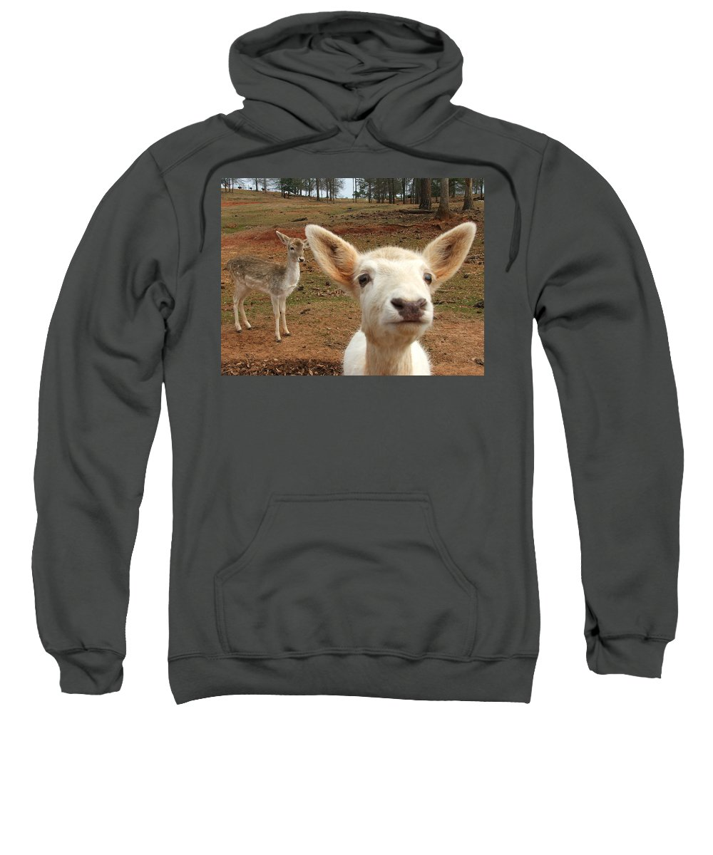 Deer Sweatshirt featuring the photograph What Is That by Robert Meanor