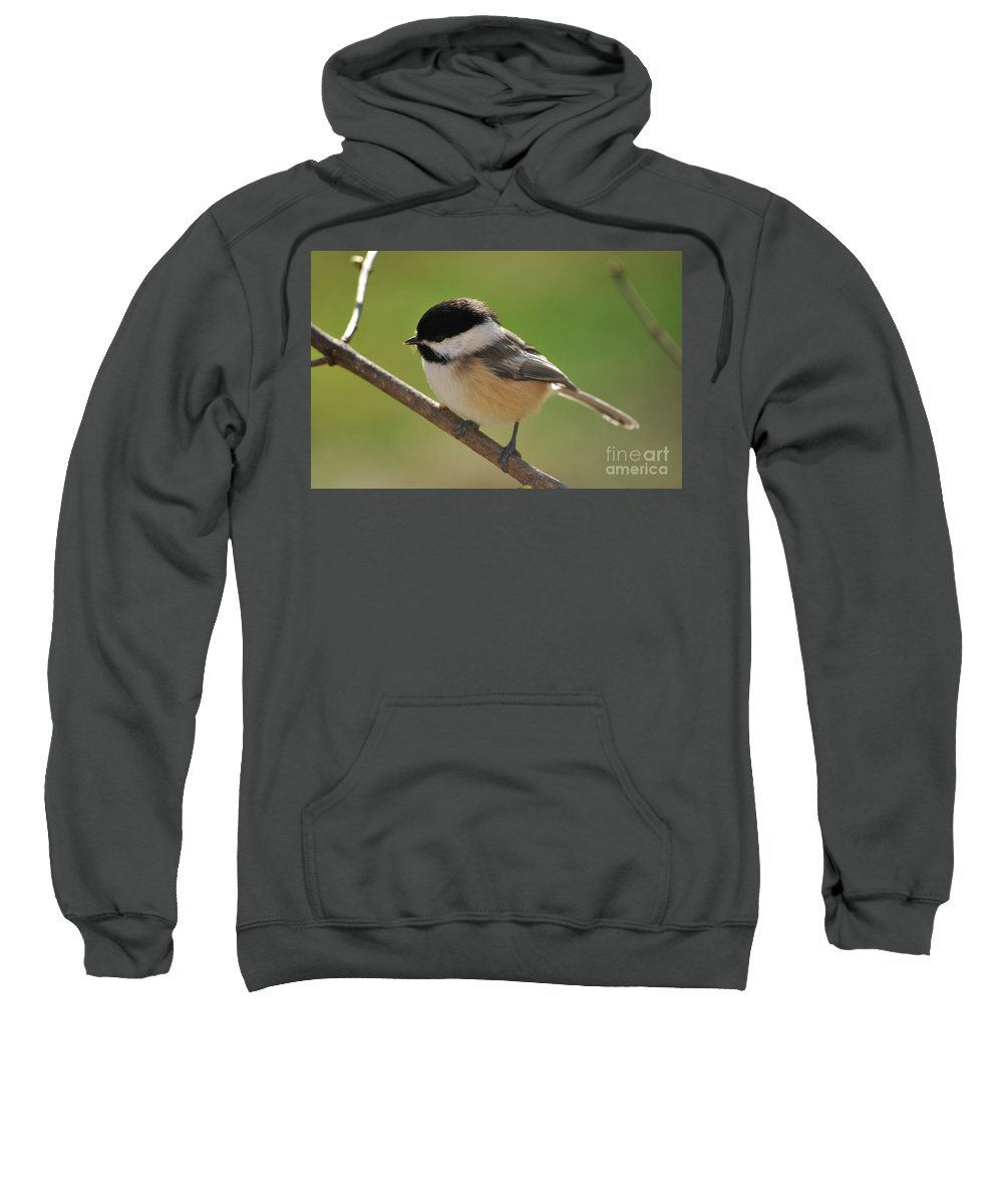 Chickadee Sweatshirt featuring the photograph What To Do What To Do by Lori Tambakis