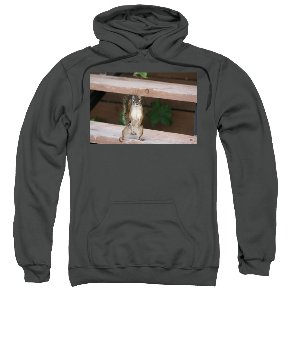 Squirrel Mother Nature Wild Animal Cute Dancing Sweatshirt featuring the photograph What You Lookin At by Andrea Lawrence