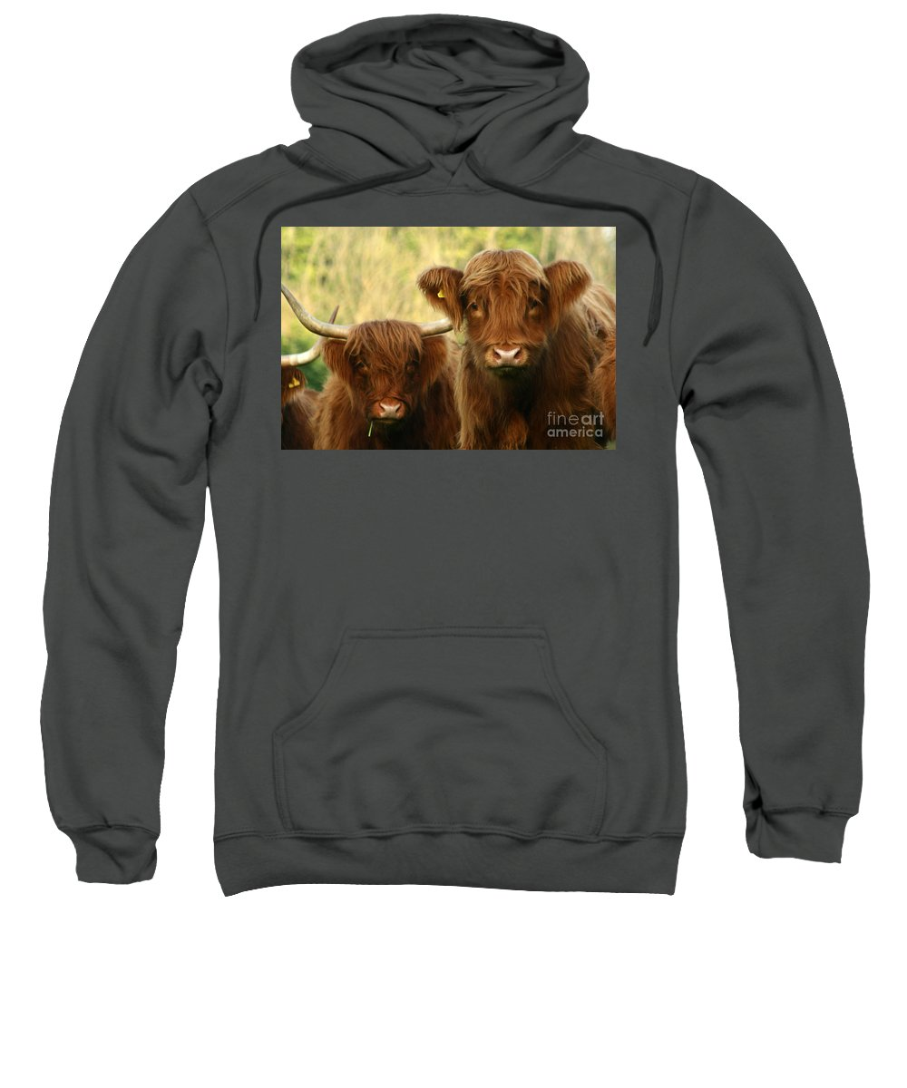 Cow Sweatshirt featuring the photograph Whats Up by Angel Ciesniarska