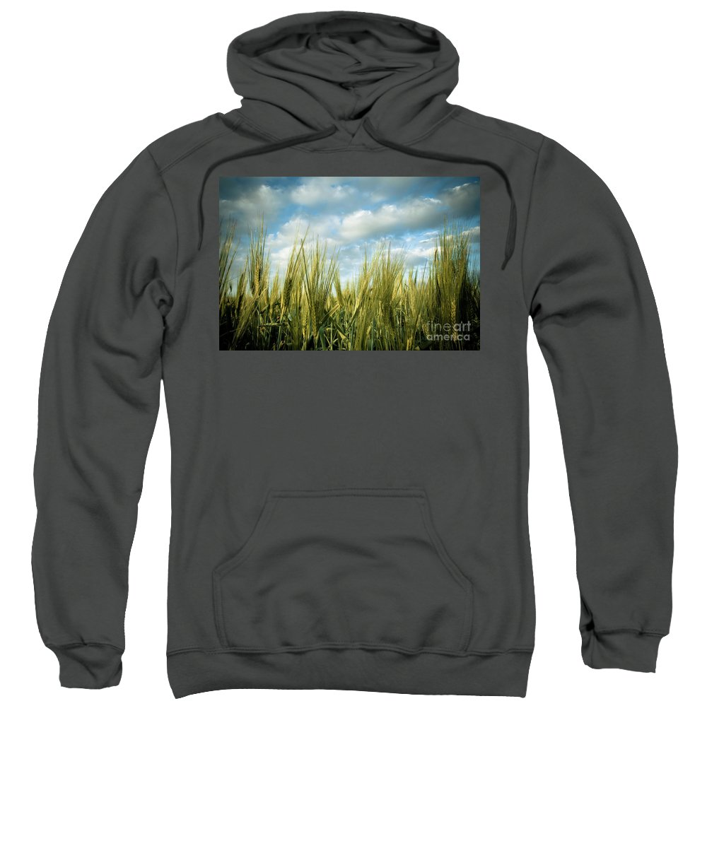 Wheat Field Sweatshirt featuring the photograph Wheat Field by Nir Ben-Yosef