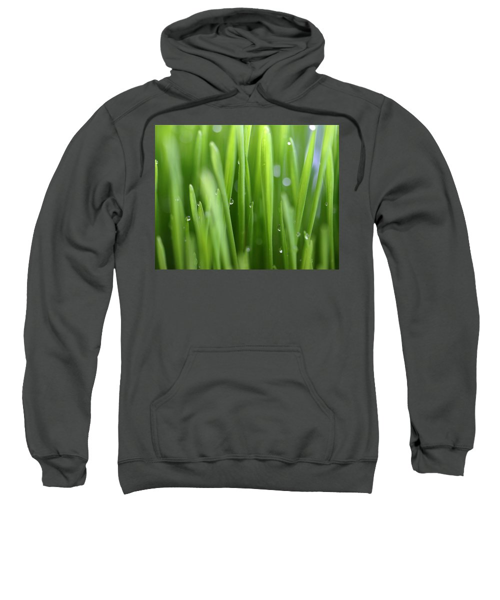Wheat Grass Green Abstract Photography Sweatshirt featuring the photograph Wheat Grass by Norah Holsten