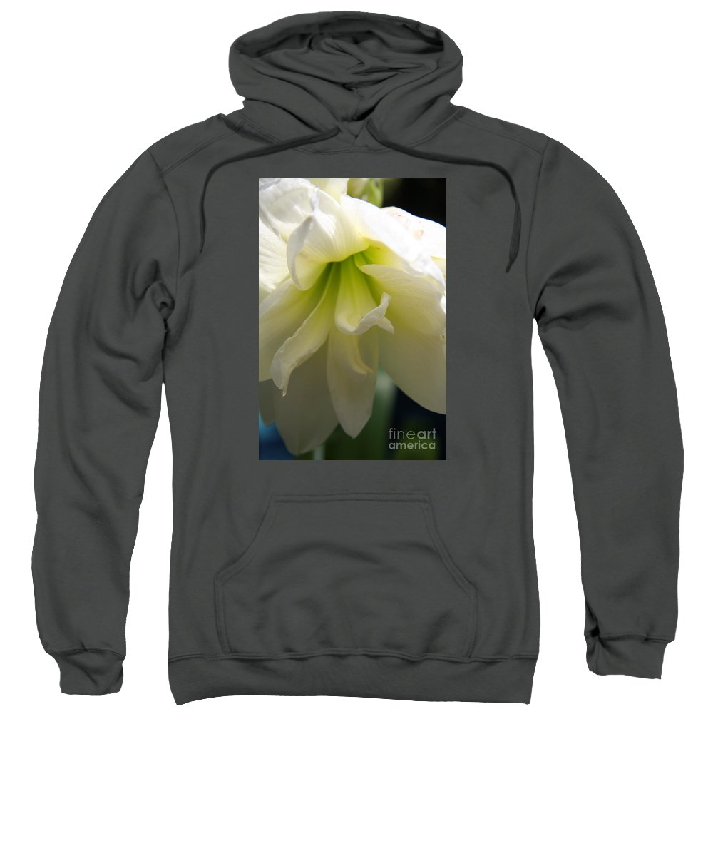 White Amarillys Sweatshirt featuring the photograph White Amarillys Close Up by Christiane Schulze Art And Photography