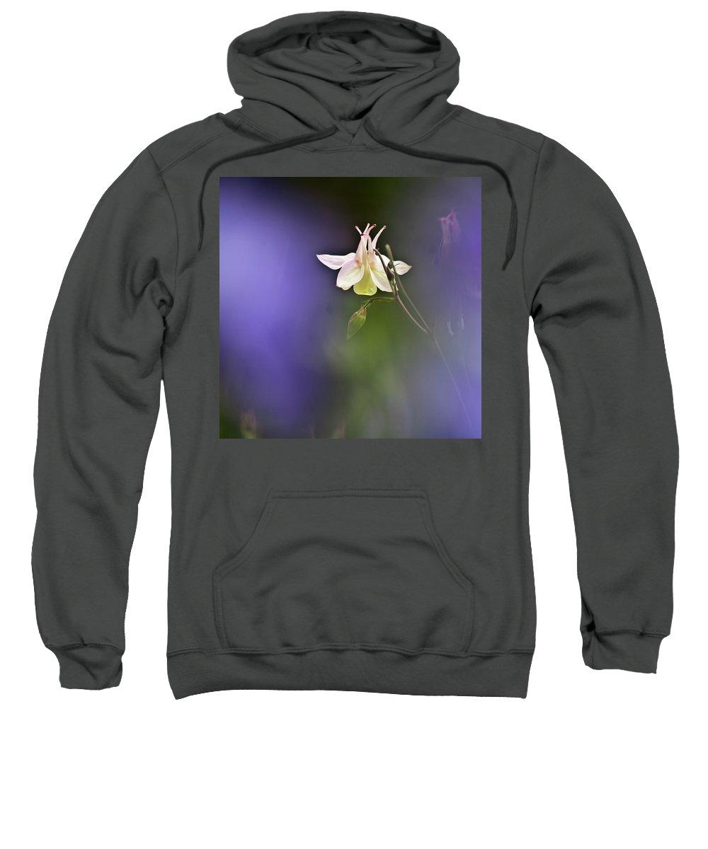Aquilegia Sweatshirt featuring the photograph White Aquilegia by Heiko Koehrer-Wagner