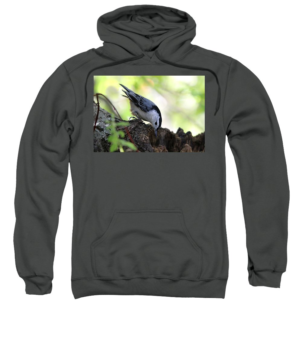 Nuthatch Sweatshirt featuring the photograph White-breasted Nuthatch by Linda Crockett
