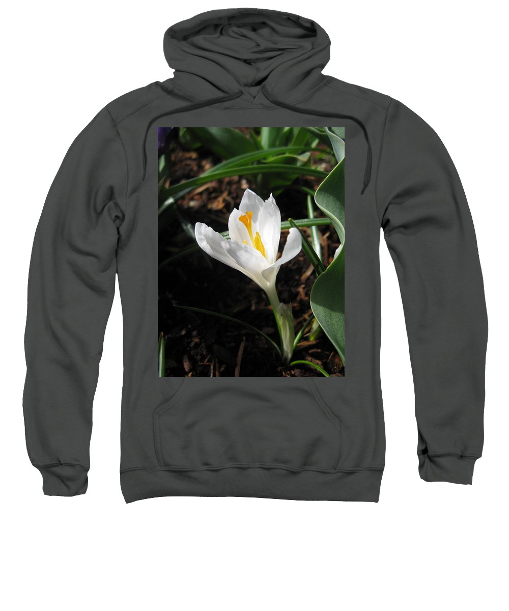 Crocus Sweatshirt featuring the photograph White Crocus by Arianne Babington