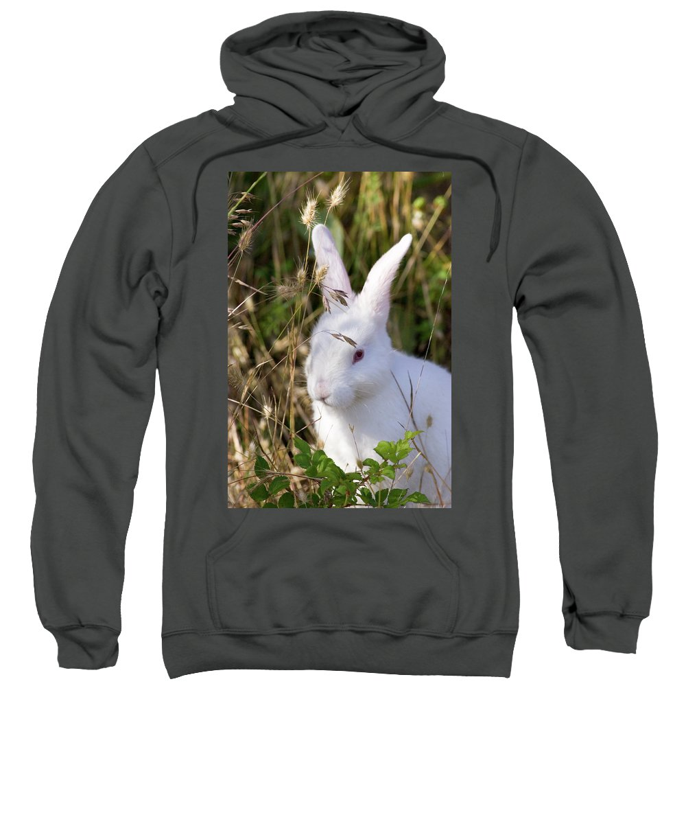 Rabbit Sweatshirt featuring the photograph White Rabbit by Randall Ingalls