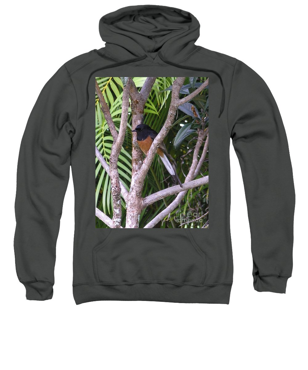 Black Birds Sweatshirt featuring the photograph White Rumped Shama by Mary Deal