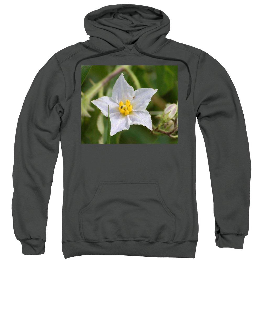Digital Photo Sweatshirt featuring the photograph White Star by David Lane