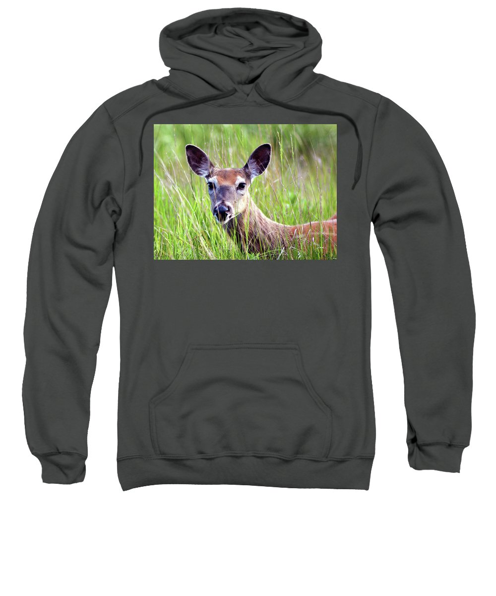 White Tail Deer Sweatshirt featuring the pyrography White Tail Doe by Sally Sperry