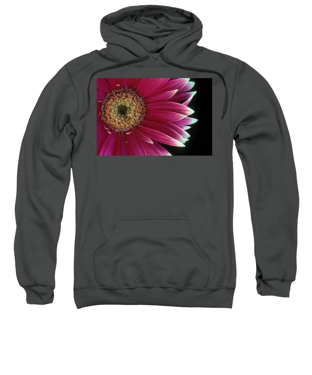 Gerber Daisy Sweatshirt featuring the photograph White Tipped Gerber by Laurie Paci