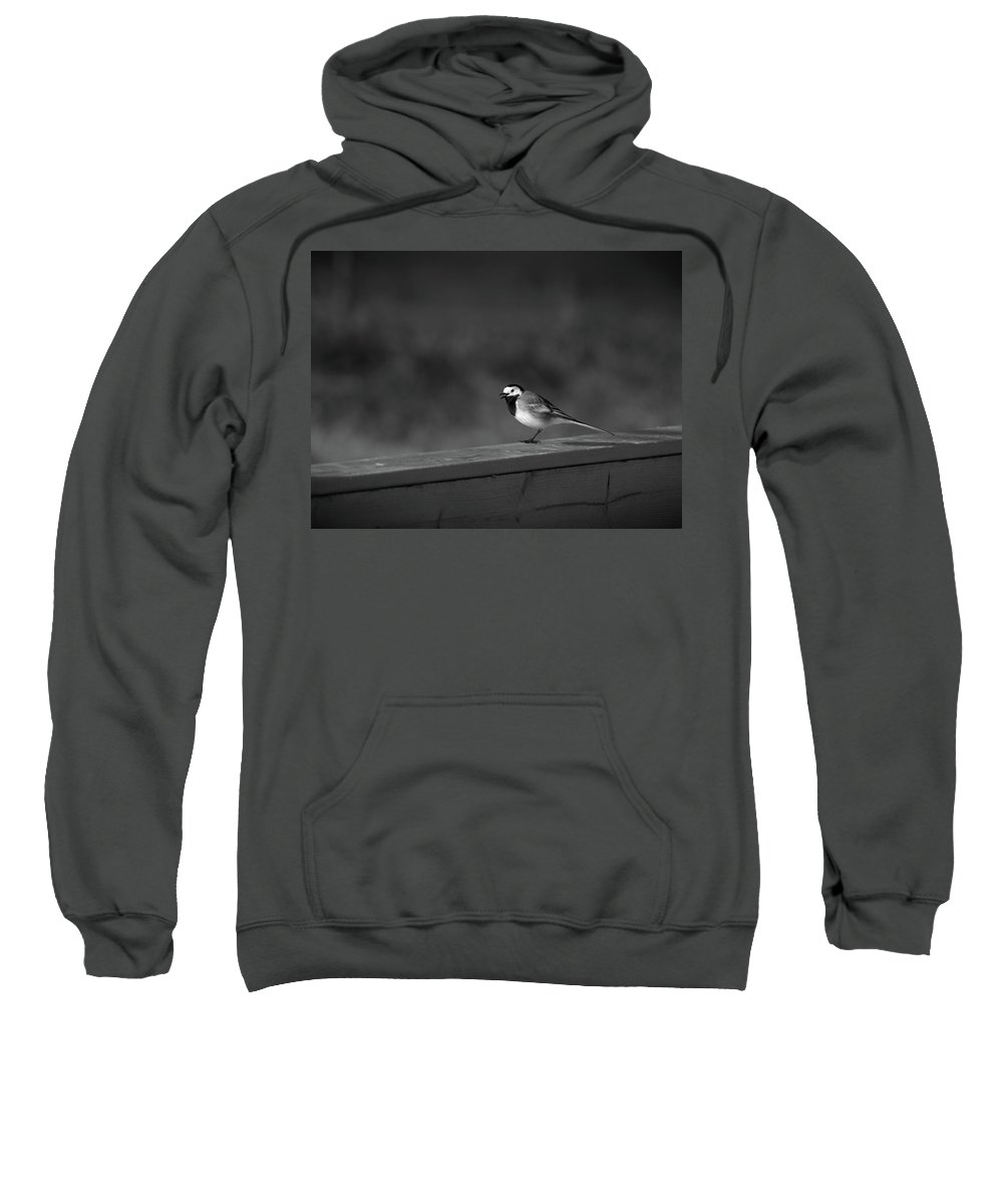 Lehtokukka Sweatshirt featuring the photograph White Wagtail 1 In Bw by Jouko Lehto