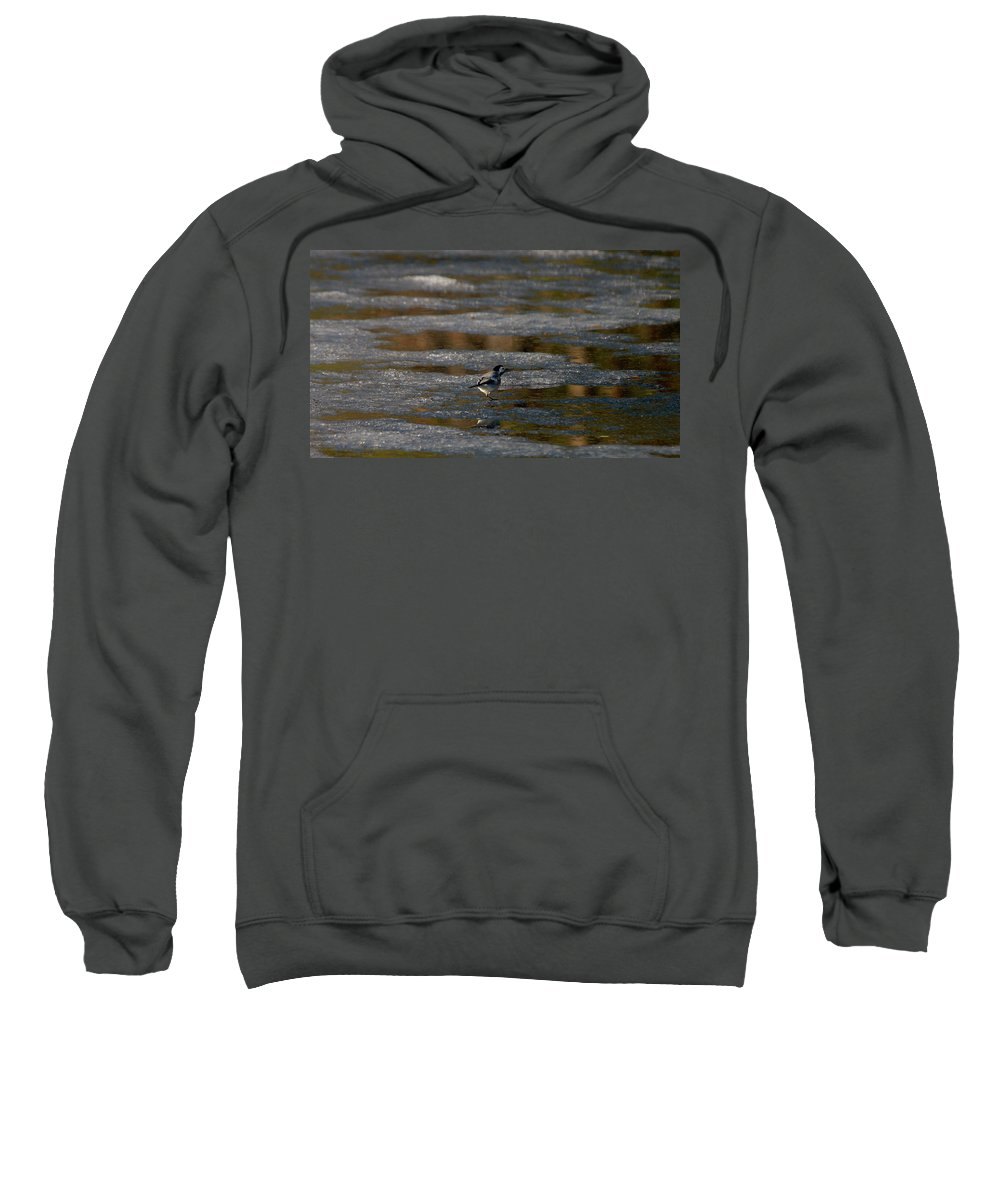 Lehtokukka Sweatshirt featuring the photograph White Wagtail 4 by Jouko Lehto