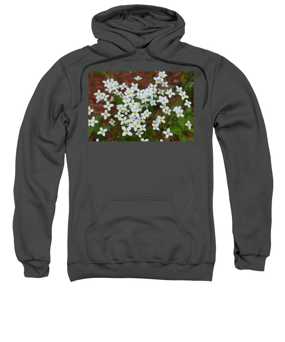 Photography Sweatshirt featuring the digital art White Wildflowers by Barbara S Nickerson