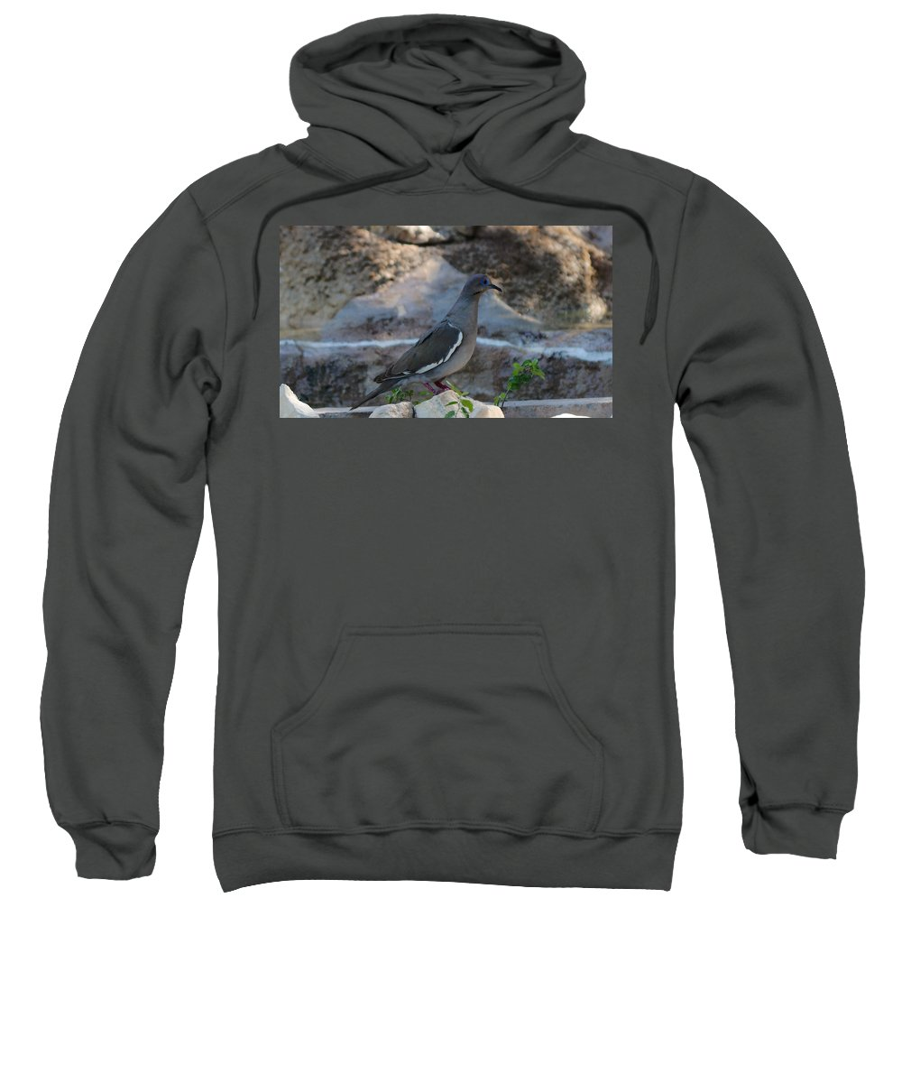 James Smullins Bird Sweatshirt featuring the photograph White Winged Dove by James Smullins