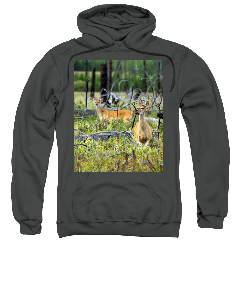 Deer Sweatshirt featuring the photograph Whitetails by Marty Koch