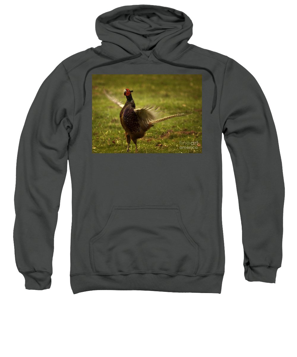 Pheasant Sweatshirt featuring the photograph Who Is The Boss by Angel Ciesniarska